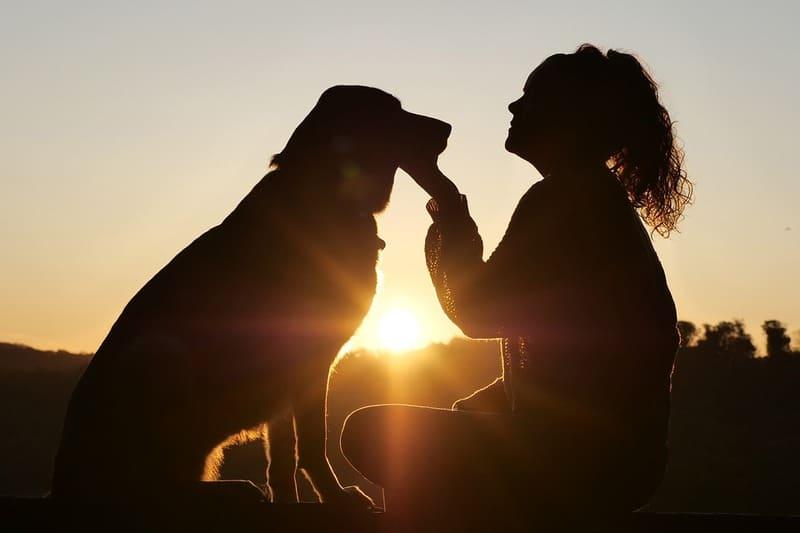 Le Yorkshire, parmi les chiens préférés des Français