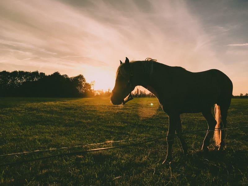 Pour prendre soin de vos chevaux