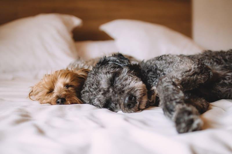Une assurance santé pour protéger votre animal de compagnie