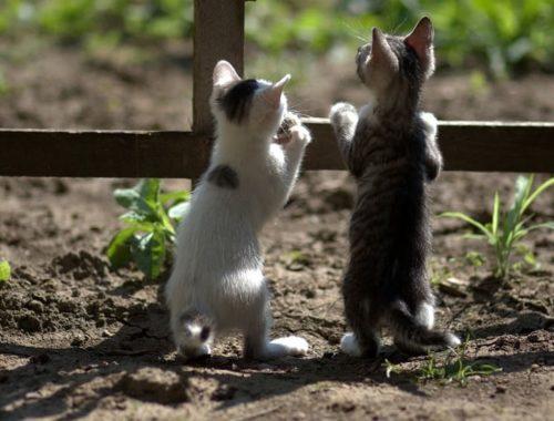 Les animaux de compagnie et leurs bienfaits